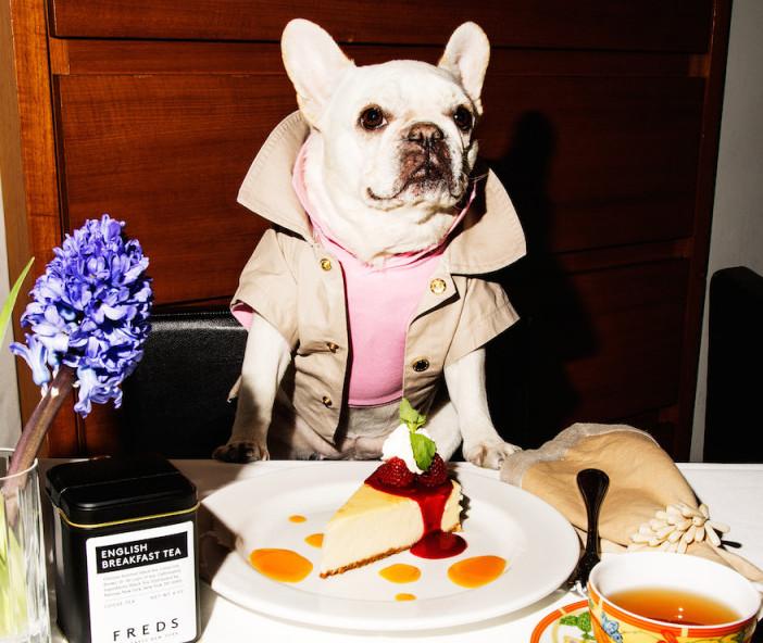 Perro degustando menú canino en el restaurante Barneys de Nueva York