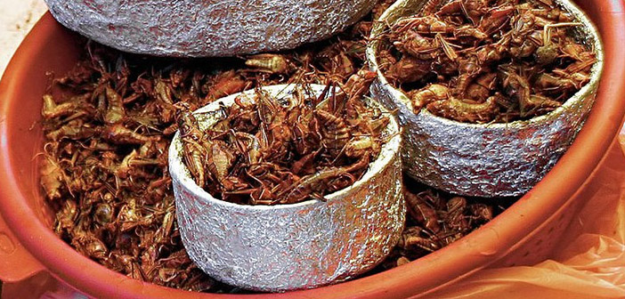 Insectos cocinados