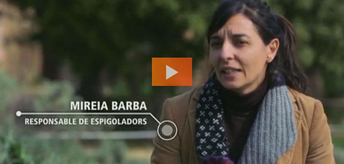 En España, Espigoladors vuelven a poner en el mercado frutas y verduras imperfectas a precio reducido