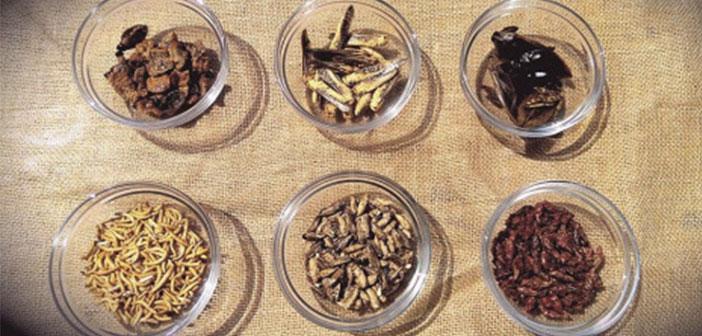 La cocina de insectos