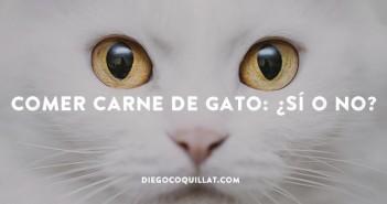 Comer carne de gato: ¿sí o no?