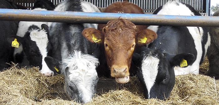 La preocupación por el uso de hormonas en animales.