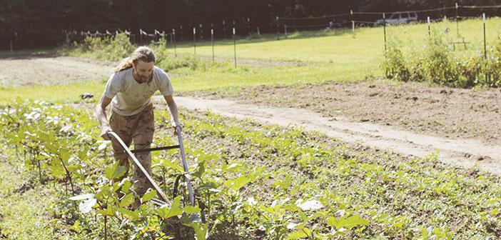 Si algo tienen los restaurantes veganos es ese vínculo con agricultores locales que ofrecen sus productos ecológicos y la seguridad de haber pasado por un proceso de cultivo 100% natural.