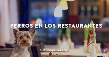 Los-perros-de-Nueva-York-tienen-vía-libre-para-ir-de-restaurantes