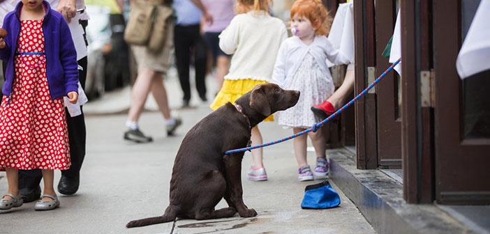 Hasta hace bien poco los perros tenían la entrada vetada en los restaurantes de la Gran Manzana, algo que levantó tal multitud de críticas entre la población neoyorkina.