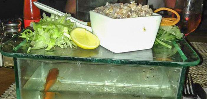 De lo que no hay duda es de que el pescado en este restaurante es fresco, al menos el de la pecera.