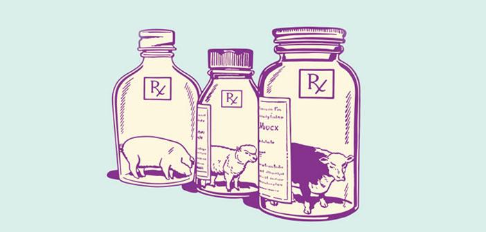 illustration viande