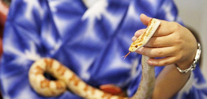 Snake Cafe-la cafetería de las serpientes en Tokio
