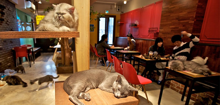 """boutique KitTea es el primer & quot; Cat Coffe"""" aux Etats-Unis."""