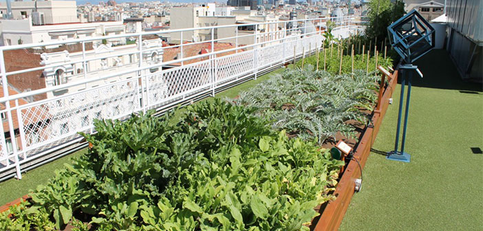 Wellington Hotel and the idea of ​​a garden on your roof.