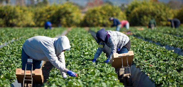 Merece la pena echar un vistazo a los costes de la comida en California. En este estado las granjas se encuentran más próximas a los puntos de consumo por lo que los gastos por transporte resultan menores.
