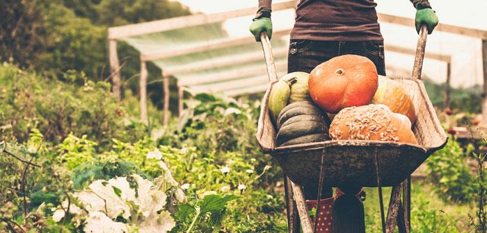 Según datos publicados recientemente por el Servicio de Investigación Económico del Departamento de Agricultura de los EE. UU., de cada dólar apoquinado por el consumidor final solo unos míseros 7.8 centavos acaban en la mano de agricultores y ganaderos.