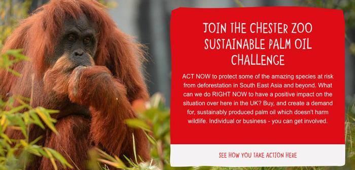 Los restaurantes que quieran ejercer su responsabilidad social y con el medio natural pueden recurrir al kit de herramientas del aceite de palma sostenible de Act for Wildlife, disponible gratuitamente en inglés.